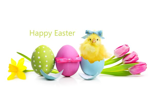 Holiday Easter Easter Egg Egg Tulip Daffodil Happy Easter HD Wallpaper | Background Image