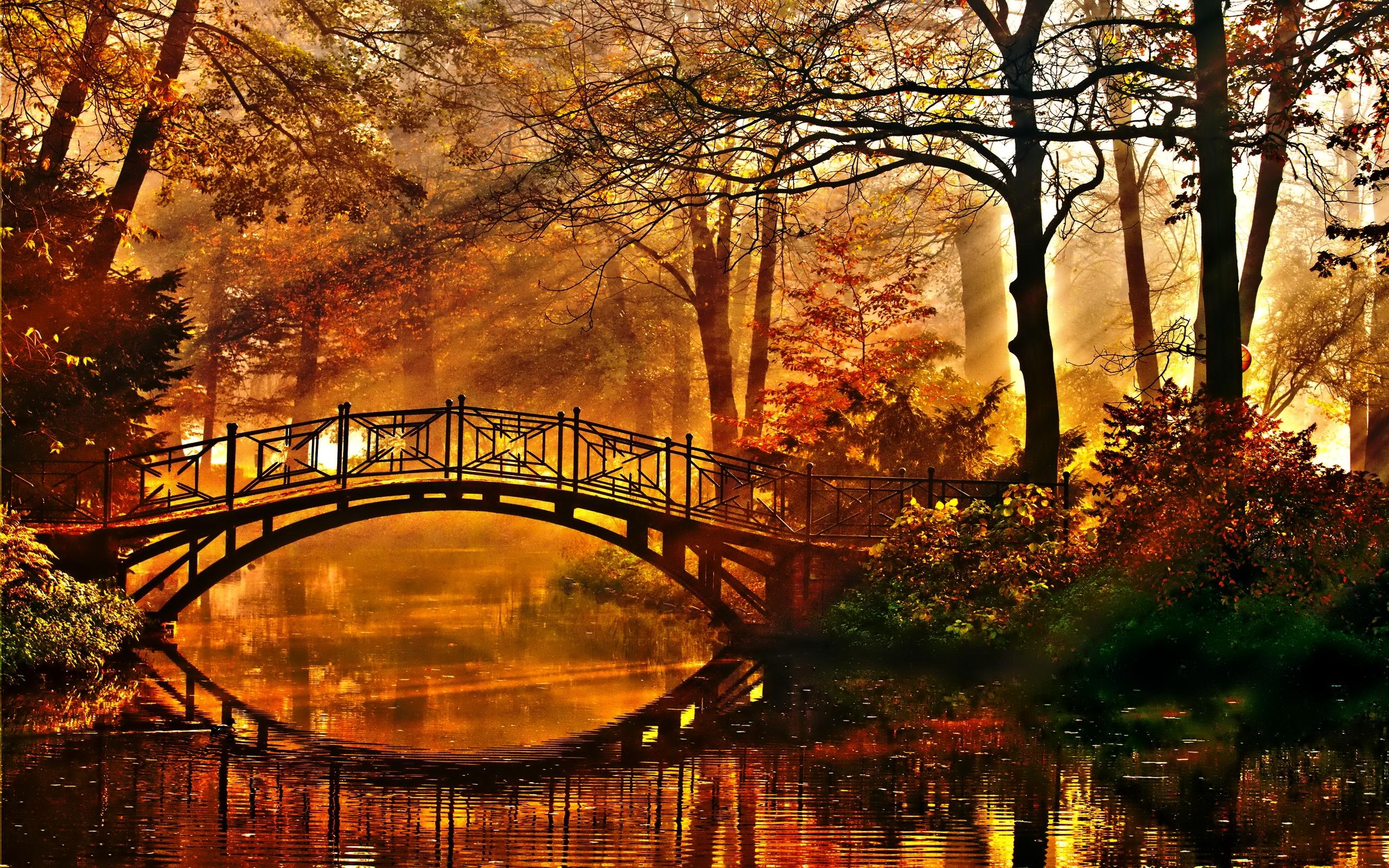 Sunshine On Autumn Forest Bridge Hd Wallpaper Background