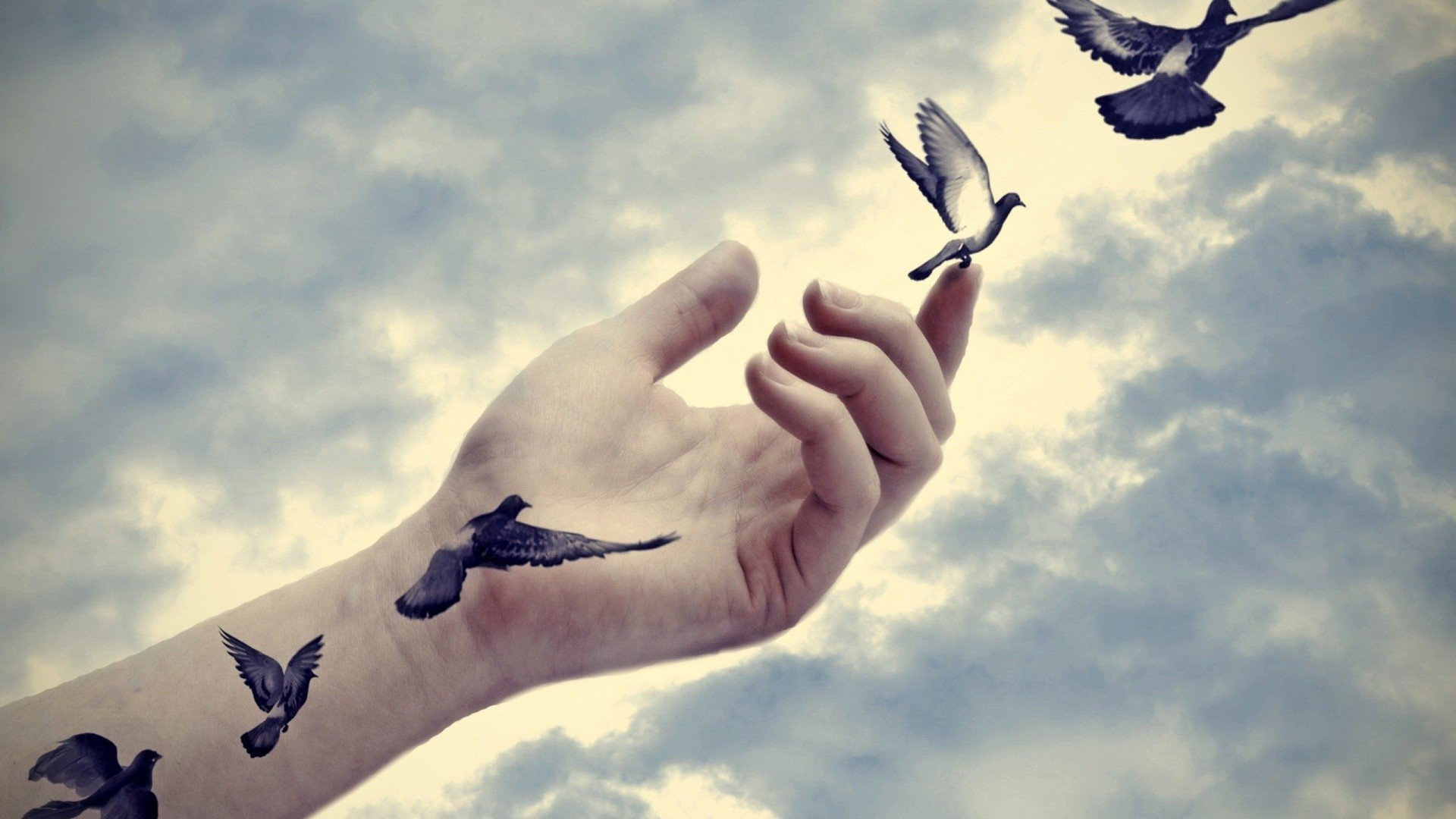 Картинки по запросу birds flying from hand