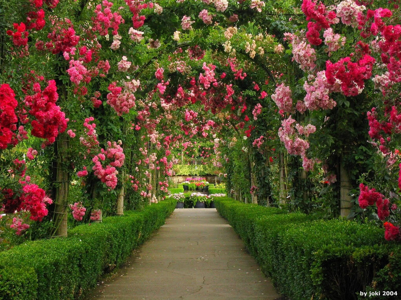 Arches in Rose Garden Wallpaper and Background Image | 1600x1200 ... for Green And Pink Flower Wallpaper  570bof