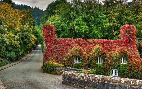 Man Made House Buildings Ivy Wales Foliage Leaf Road Fall HD Wallpaper | Background Image