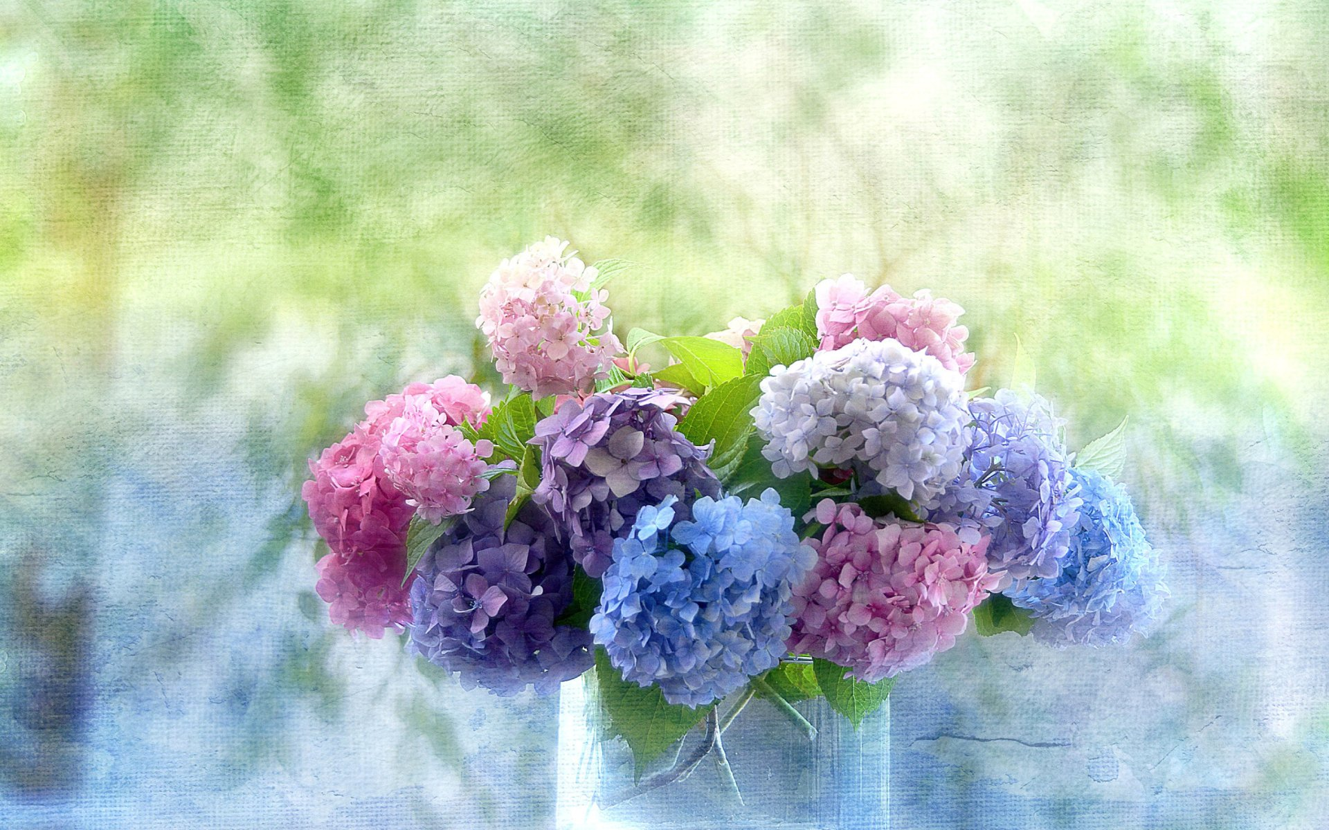 Blue Purple And Pink Hydrangeas Hd Wallpaper Background Image