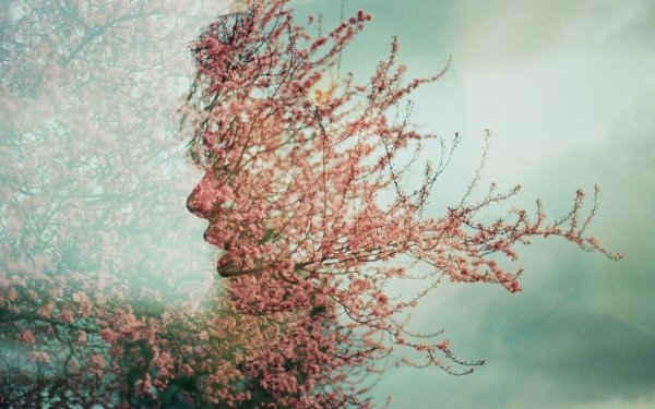 Photography Manipulation Profile Spring Blossom Pink Branch HD Wallpaper | Background Image