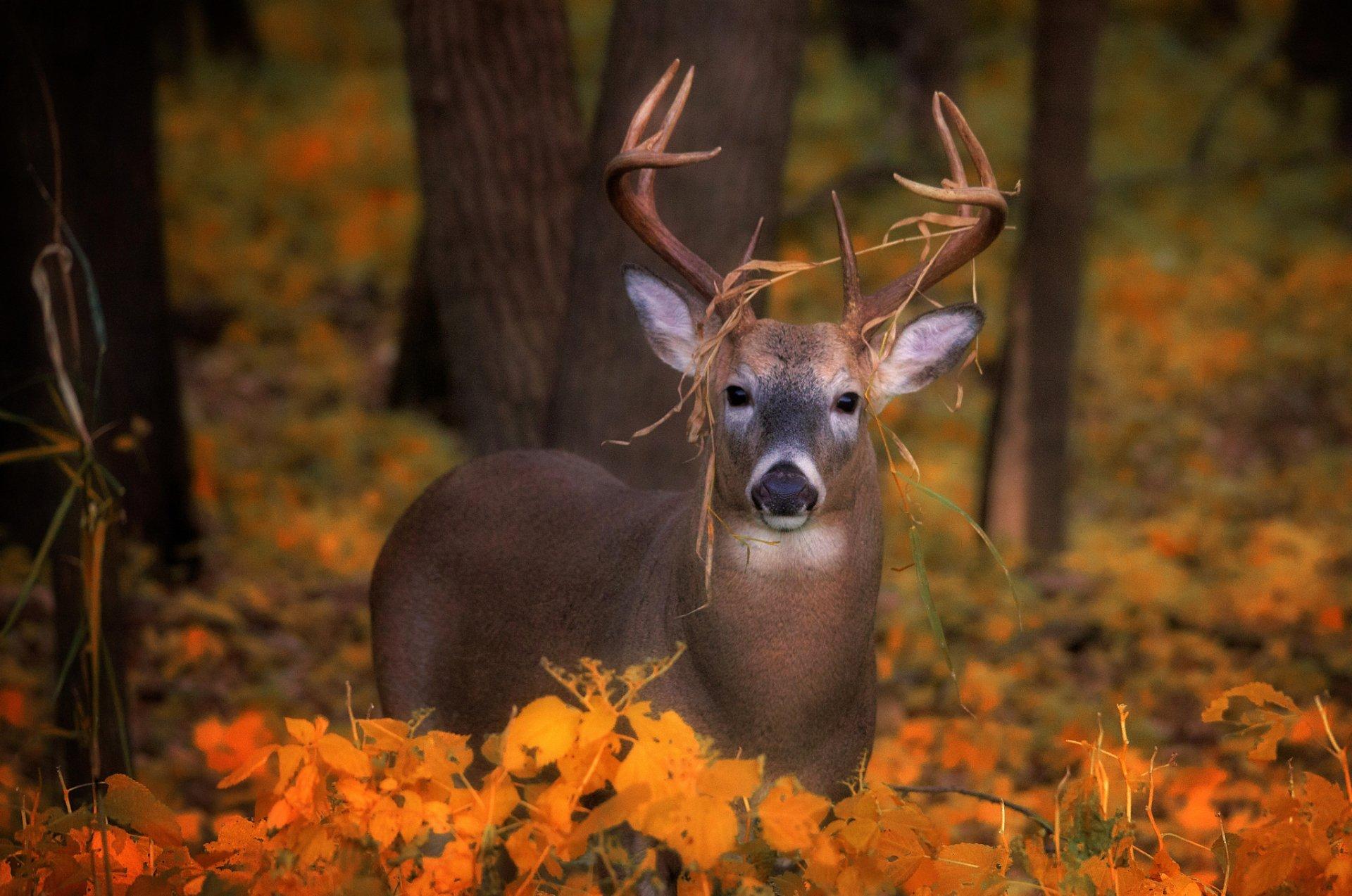 Cerf fond d 39 cran hd arri re plan 2048x1358 id - Image d animaux gratuit ...