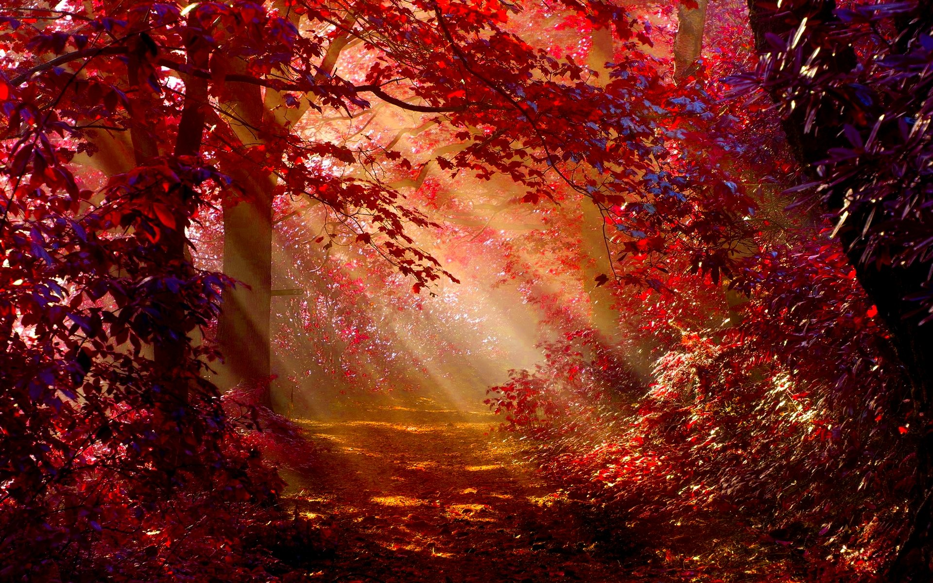 Sunlight In Autumn Forest Full HD Wallpaper And Background Image