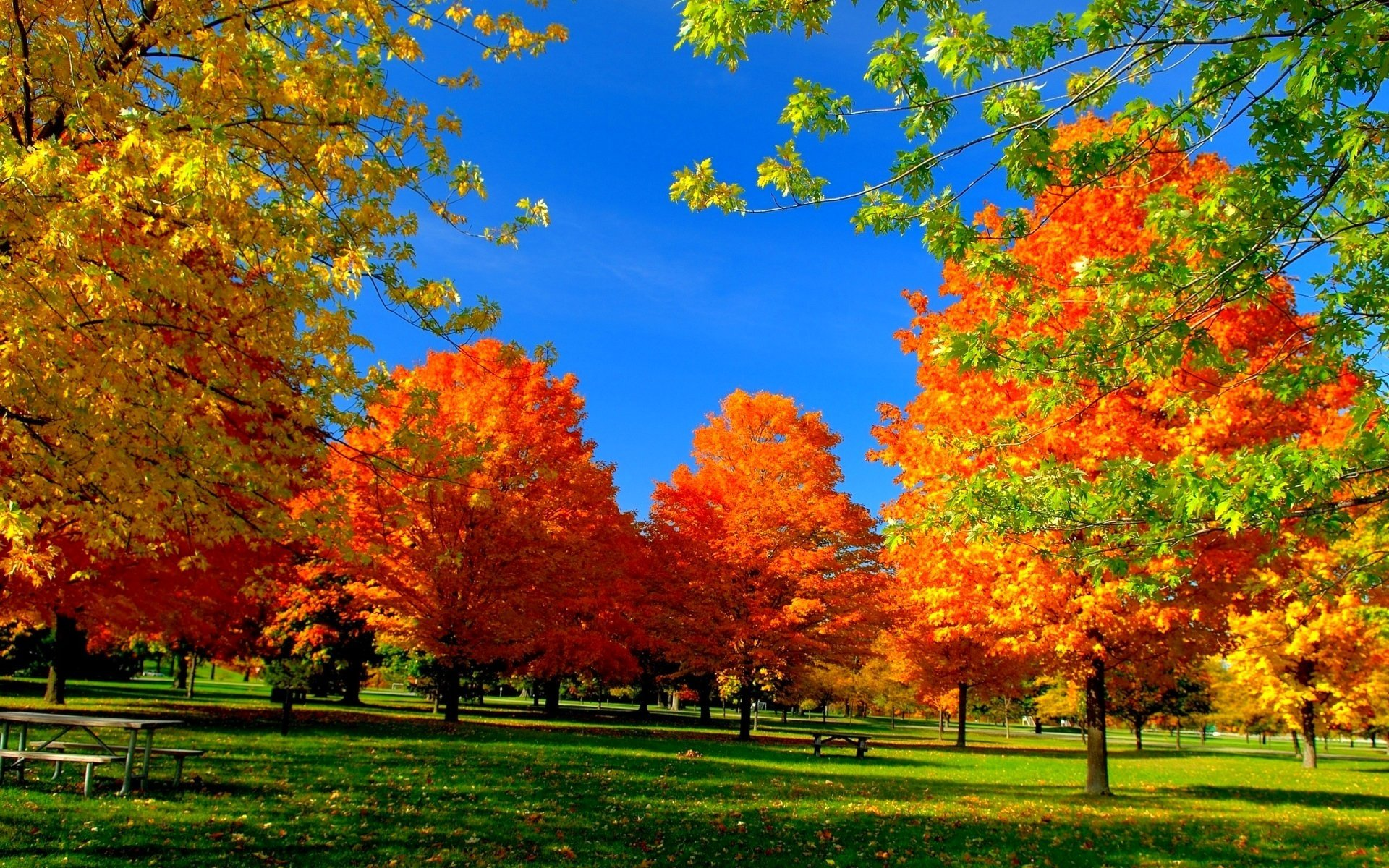 Autumn Trees in the Park HD Wallpaper | Background Image ...