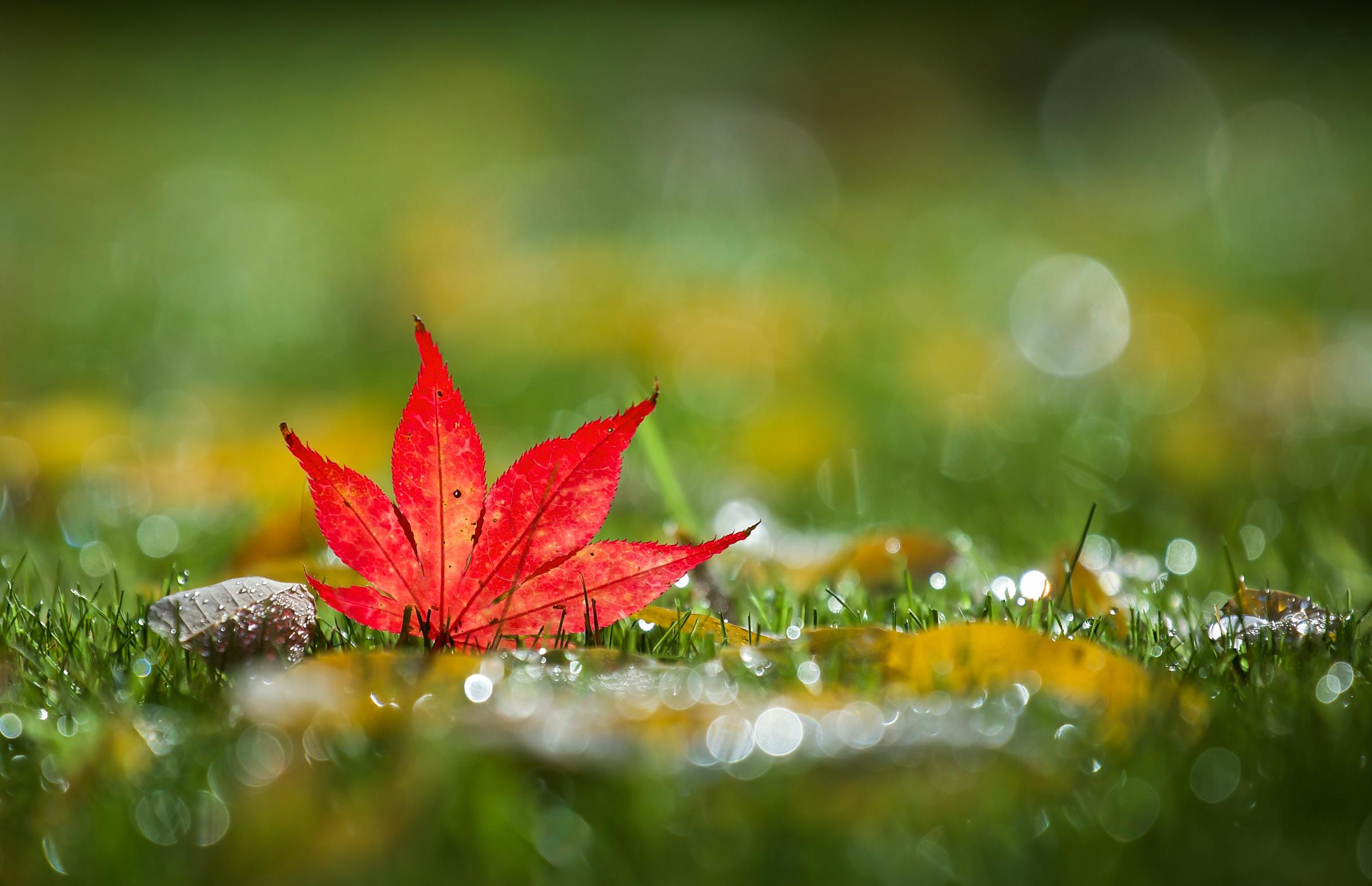 leaf hd wallpaper | background image | 2400x1549 | id:707163