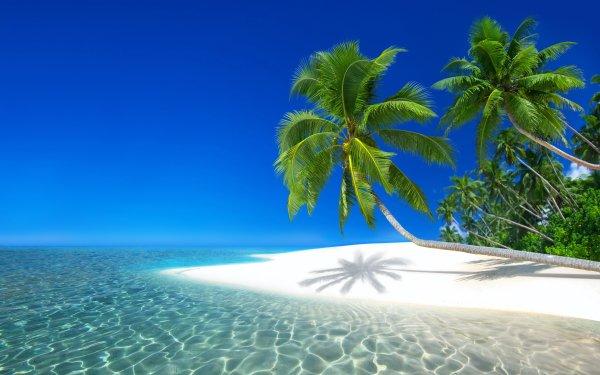 Tierra/Naturaleza Tropico Seychelles Sea Playa Isla Palmera Fondo de pantalla HD | Fondo de Escritorio