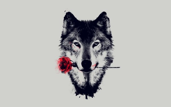 Animal Wolf Artistic Red Rose HD Wallpaper   Background Image