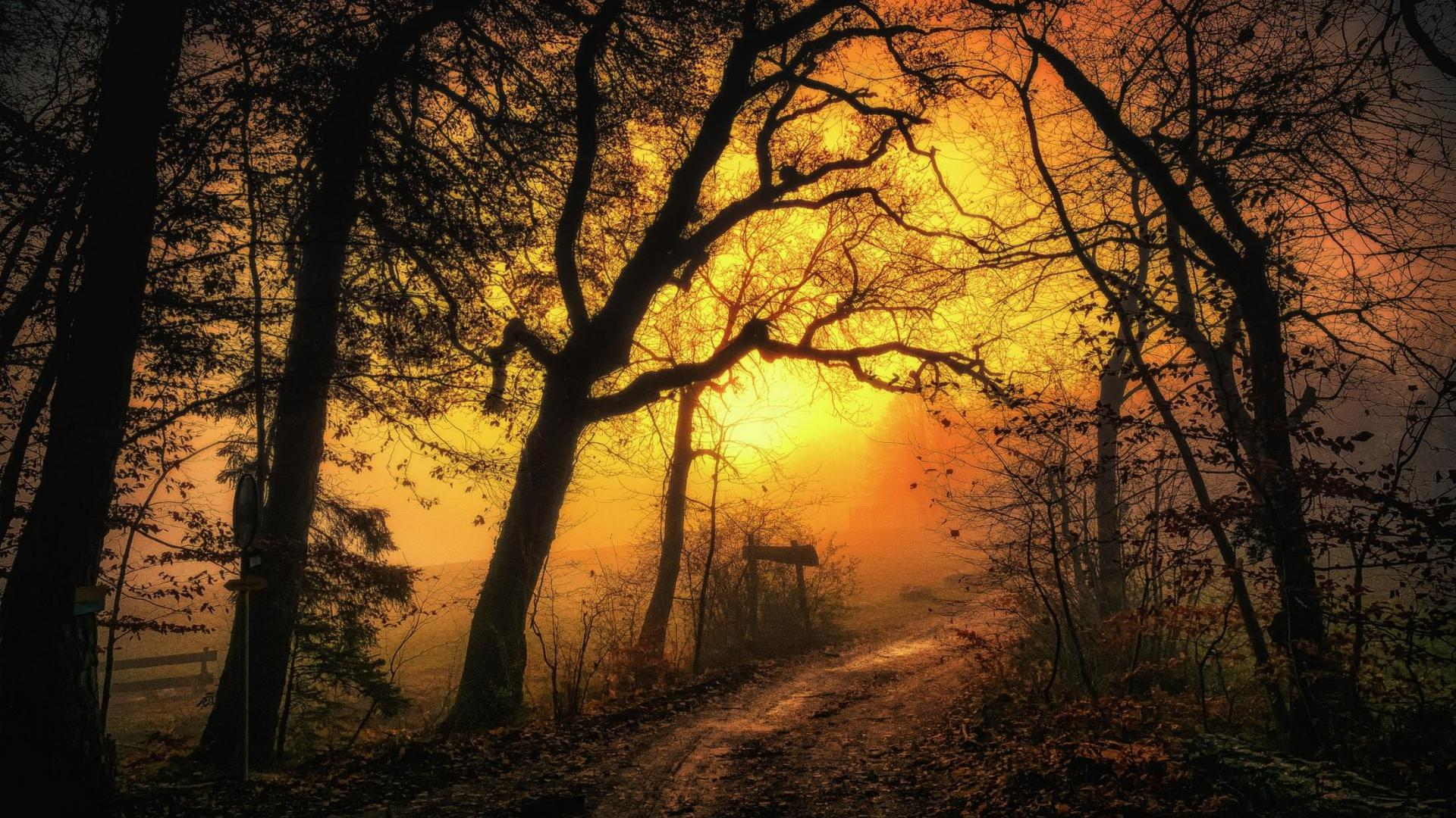 Misty Forest Path Hd Wallpaper Background Image
