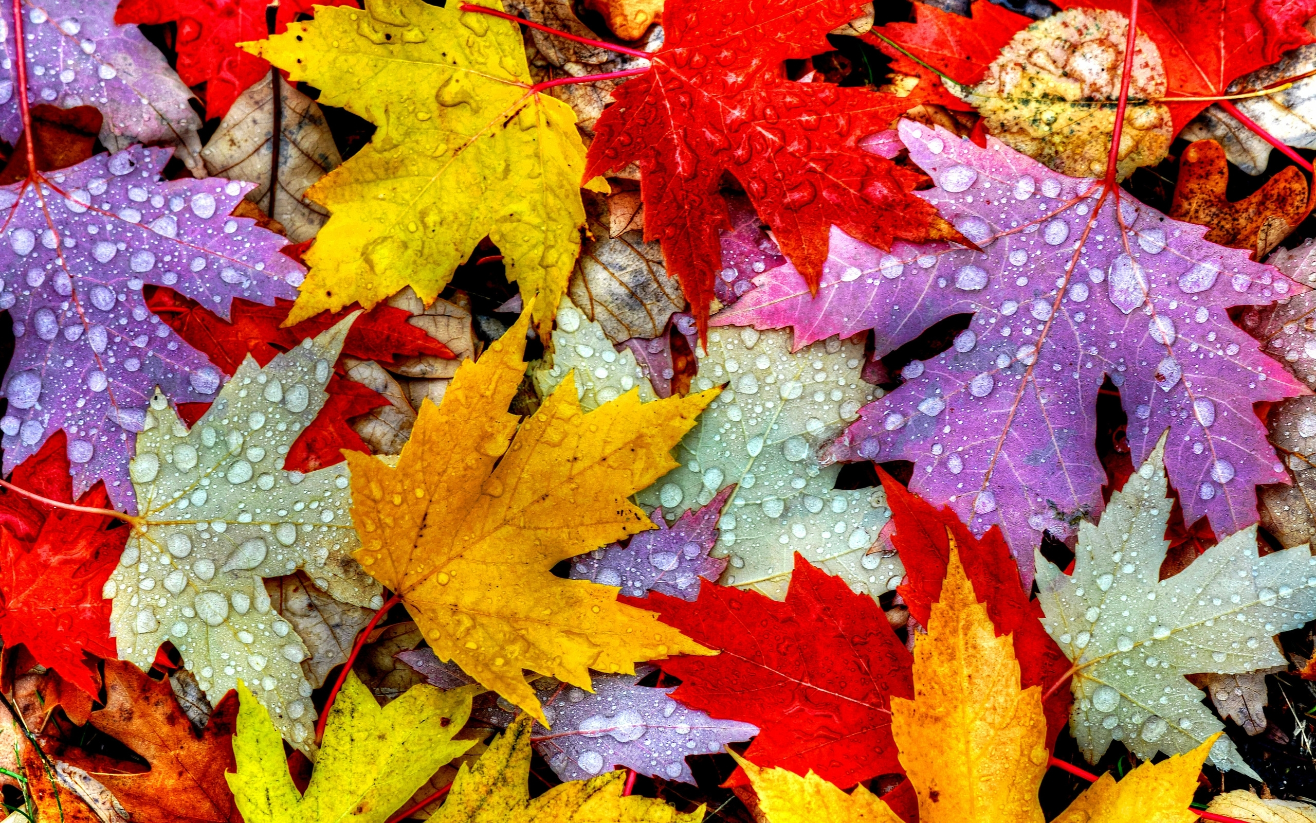 Wet Autumn Leaves HD Wallpaper