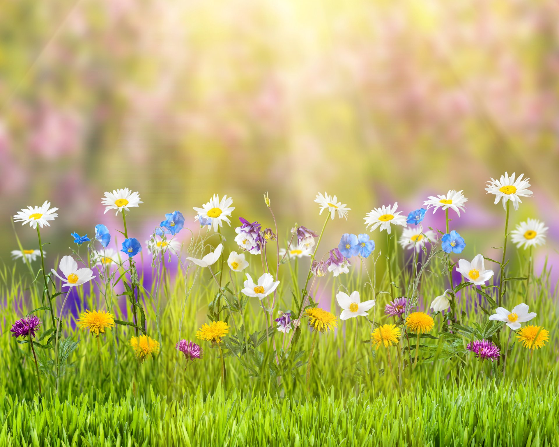 Earth - Spring  Nature Flower Sunny Grass White Flower Yellow Flower Wallpaper