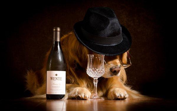 Animal Golden Retriever Dogs Hat Bottle Wine Glass Humor Glasses HD Wallpaper | Background Image