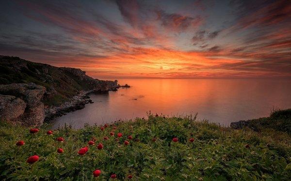 Earth Ocean Coast Nature Sunset Sky Horizon Red Flower Coastline Flower Peony HD Wallpaper | Background Image