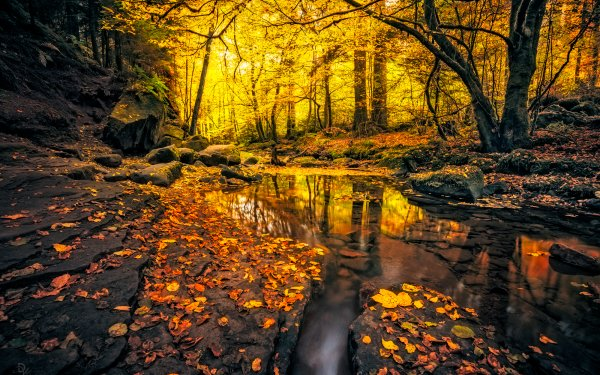 Earth Stream Forest Fall Foliage Rock HD Wallpaper | Background Image