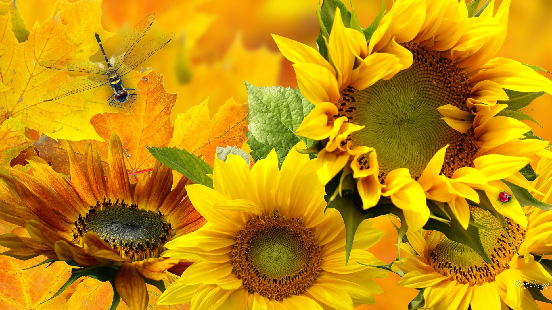Sunflowers And Dragonfly HD Wallpaper
