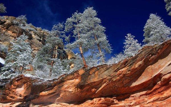 Earth Canyon Canyons Oak Creek Canyon Sedona Arizona Winter Tree HD Wallpaper | Background Image