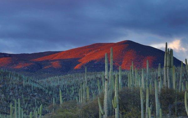 Earth Desert Cactus Nature Landscape HD Wallpaper | Background Image