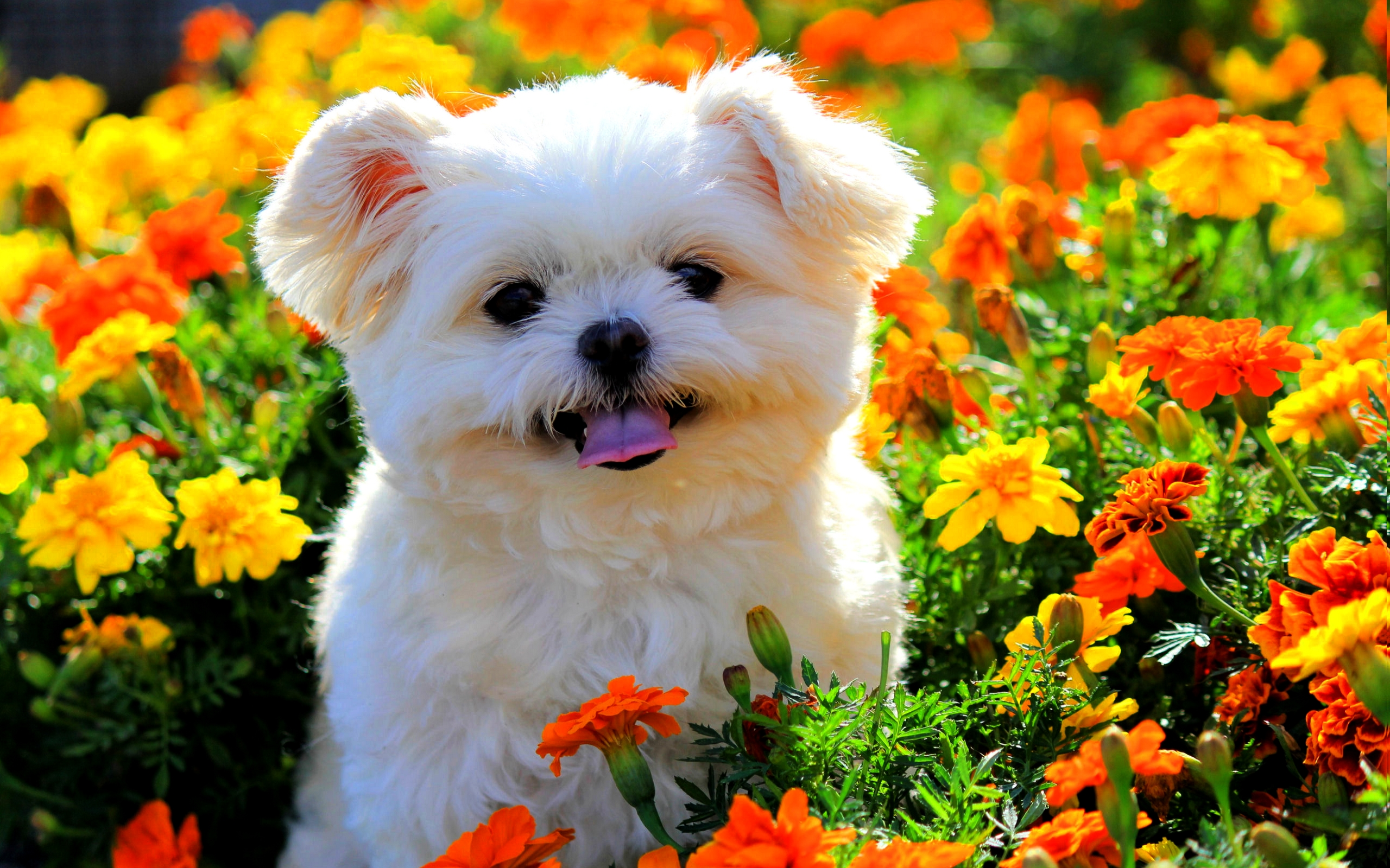 Cute Puppy In Flowers HD Wallpaper