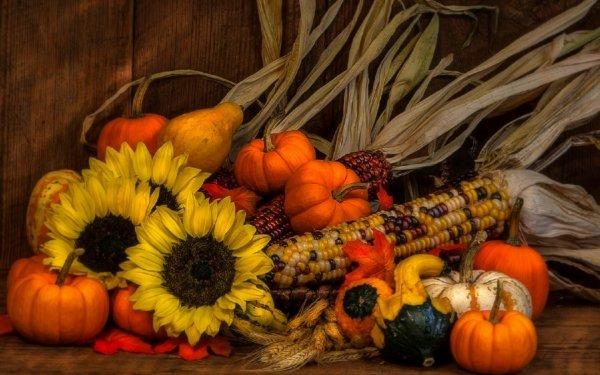 Photography Still Life Fall Pumpkin Gourd Sunflower Wheat Corn HD Wallpaper | Background Image