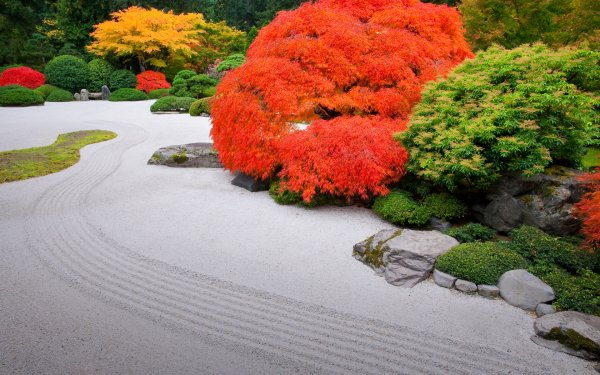 Man Made Japanese Garden Tree Colors Bush HD Wallpaper | Background Image