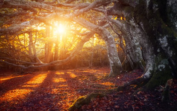 Earth Fall Sunbeam HD Wallpaper | Background Image