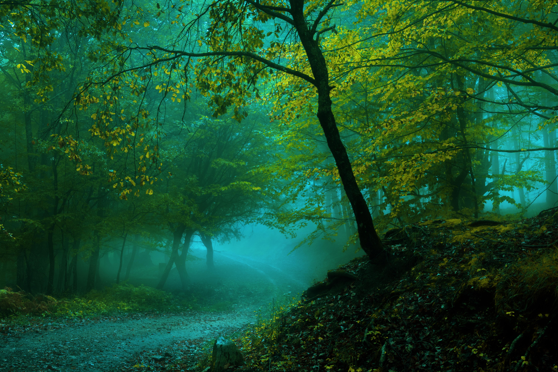 Обои misty, forest, Road. Природа foto 14