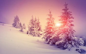 HD Wallpaper | Background Image ID:780012