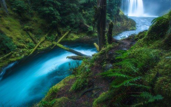 Earth Waterfall Waterfalls Koosah Falls Oregon Forest Green Stream Fern HD Wallpaper   Background Image