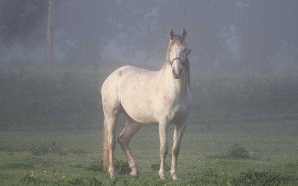Animal Horse Fog HD Wallpaper | Background Image