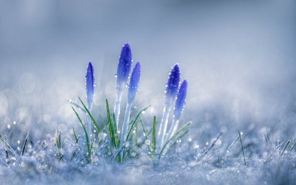 HD Wallpaper | Background Image ID:800603