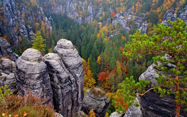 Earth Mountain Mountains Forest Sandstone Elbe Sandstone Mountains Fall Foliage Saxony Germany HD Wallpaper | Background Image