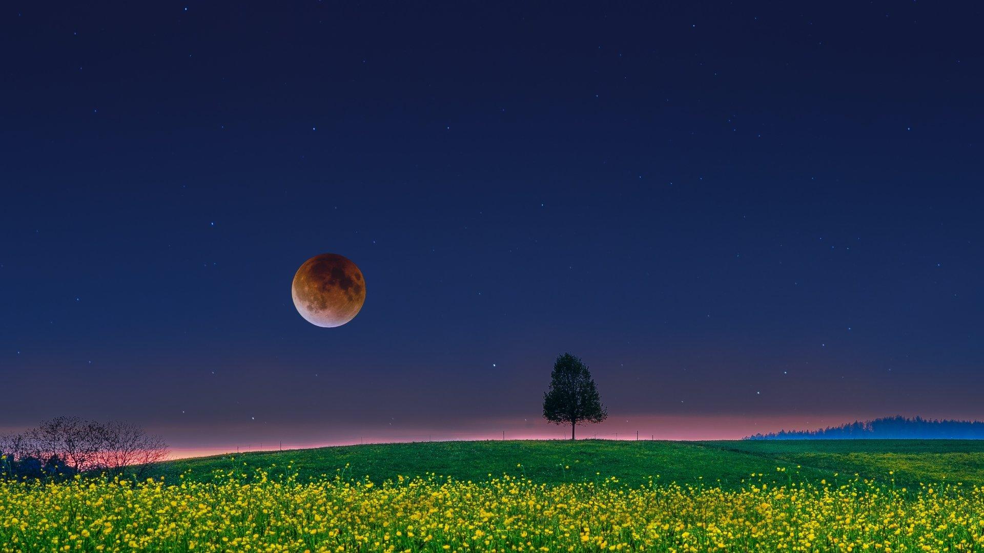 Artistique - Fantaisie  Artistique Champ Arbre Lonely Tree Lune Full Moon Fond d'écran
