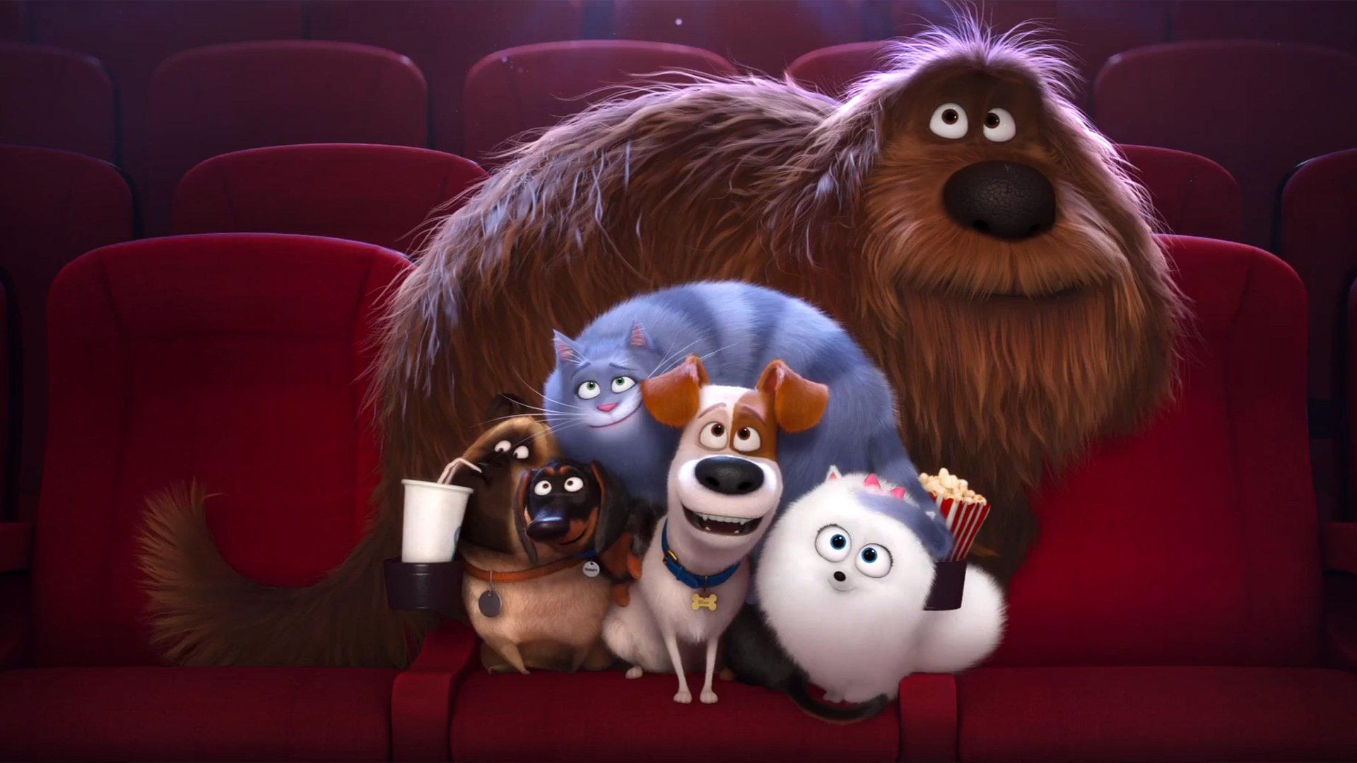 20 The Secret Life Of Pets Hd Wallpapers Background Images