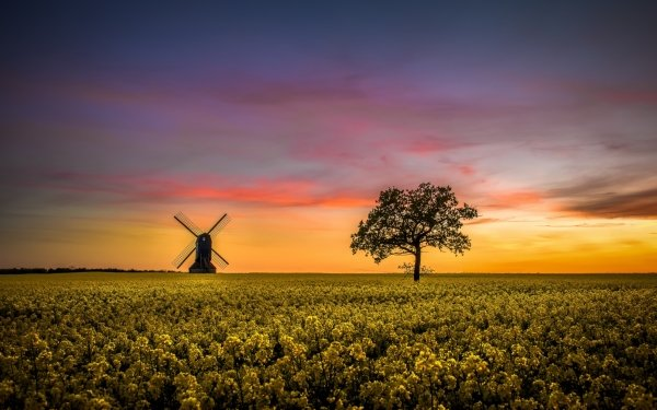 Man Made Windmill Buildings Field Tree Horizon Lonely Tree Rapeseed Yellow Flower Summer Nature Sunset Sky HD Wallpaper   Background Image