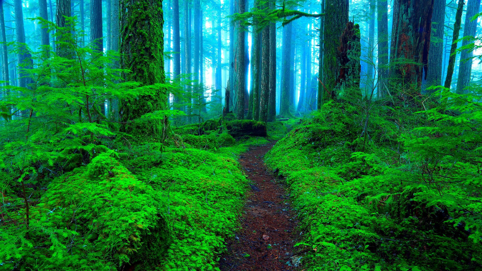 Earth - Path  Earth Forest Green Fog Wallpaper