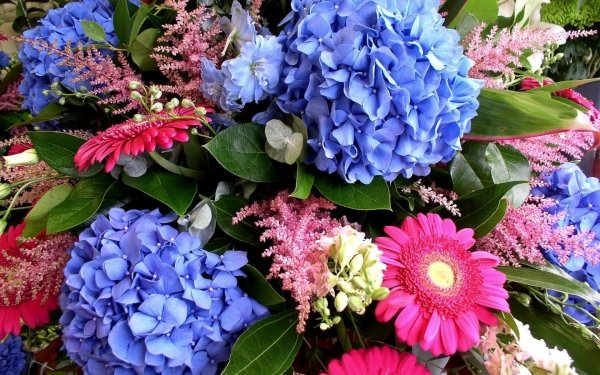 Earth Flower Flowers Spring Colors Colorful Hydrangea Gerbera Leaf HD Wallpaper | Background Image