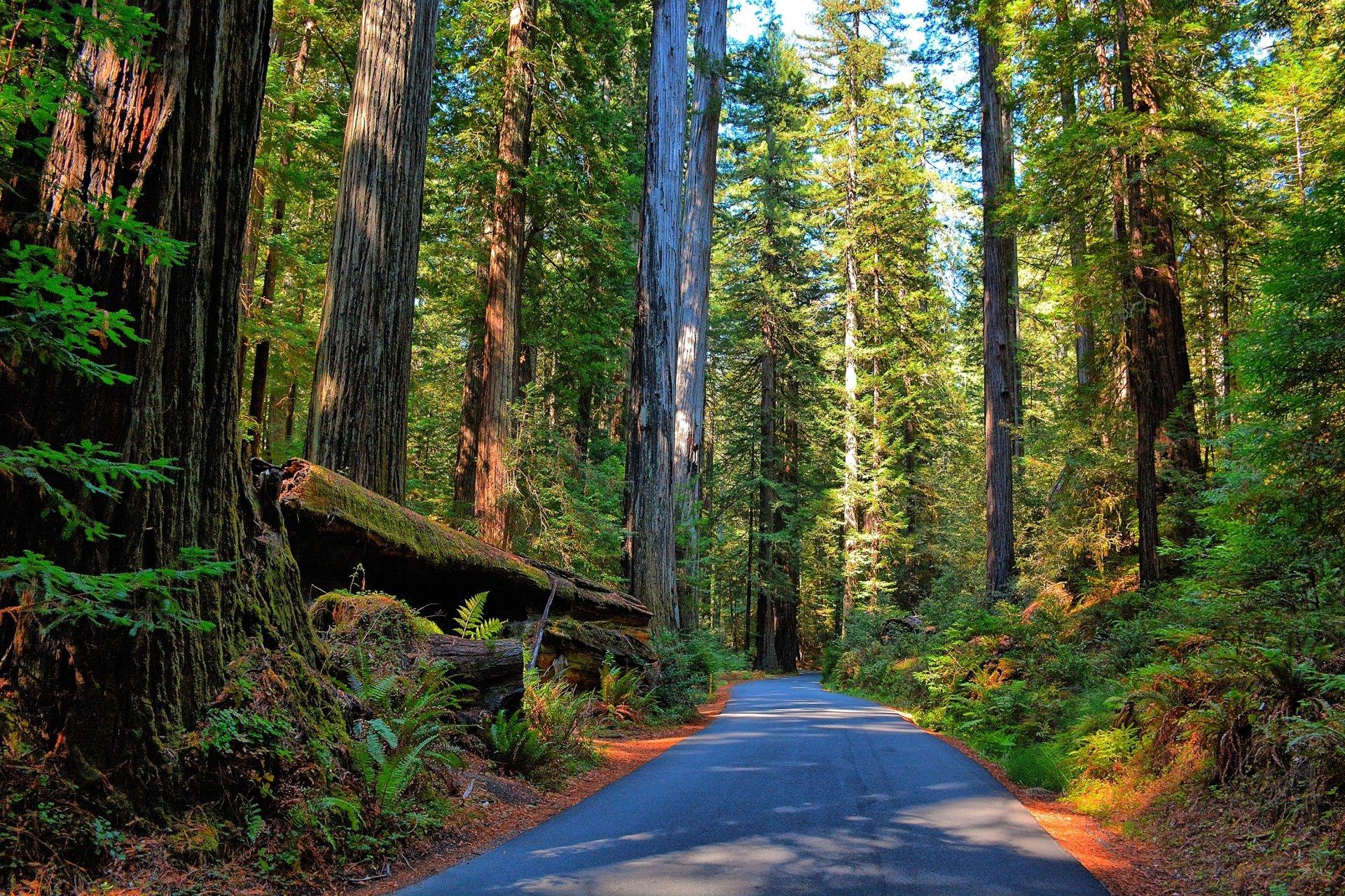 Man Made - Road  Forest Sunbeam Tree Wallpaper