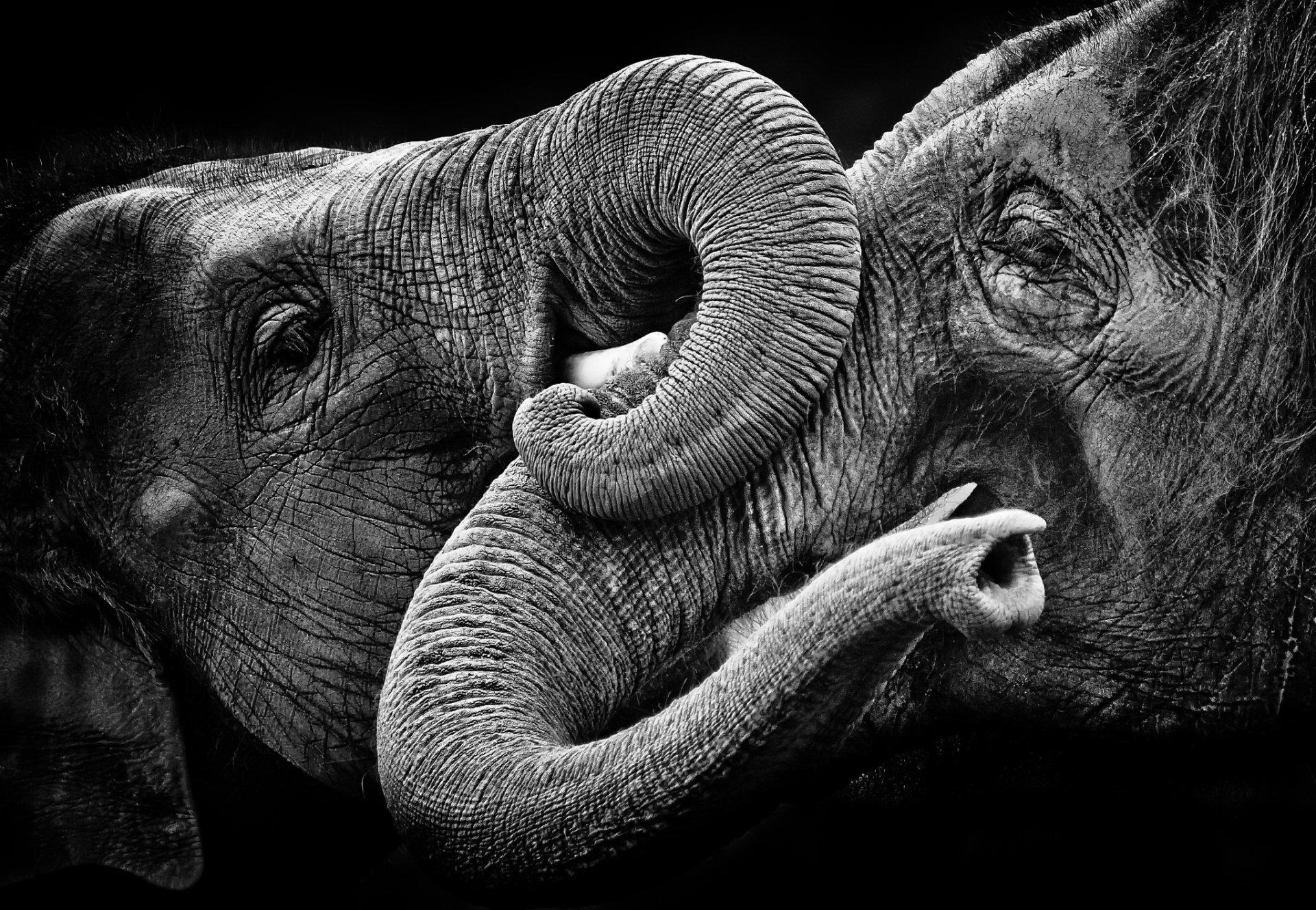 Elephant HD Wallpaper   Background Image   2048x1416   ID ...