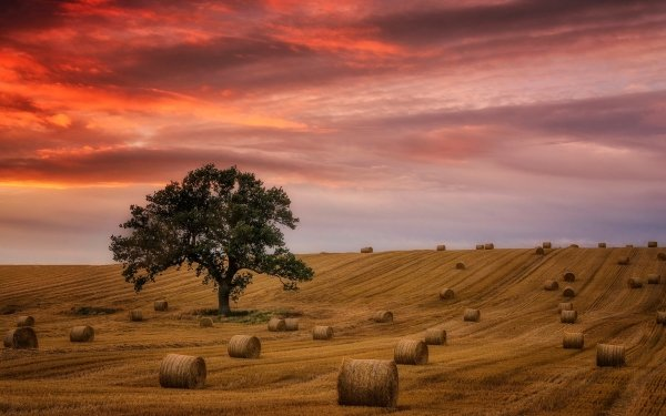 Earth Field Nature Tree Lonely Tree Sunset Summer Haystack Cloud HD Wallpaper   Background Image
