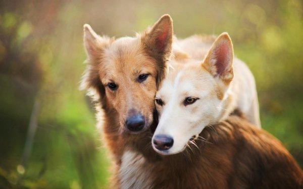 Animal Dog Dogs Love Friend Pet HD Wallpaper | Background Image