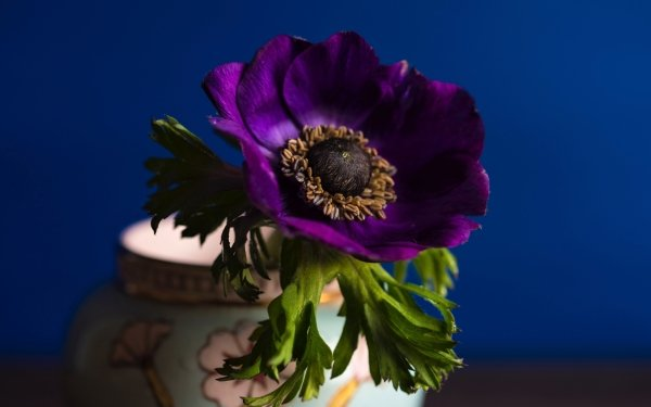 Man Made Flower Anemone Leaf Purple Flower Vase HD Wallpaper   Background Image