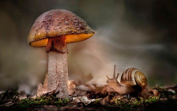 Earth Mushroom Nature Fall Macro Snail HD Wallpaper   Background Image