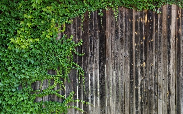Man Made Wood Ivy Plant HD Wallpaper | Background Image