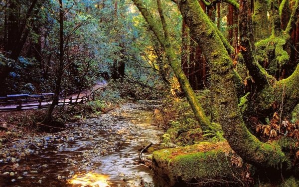 Earth Forest Nature Water Creek Moss HD Wallpaper | Background Image
