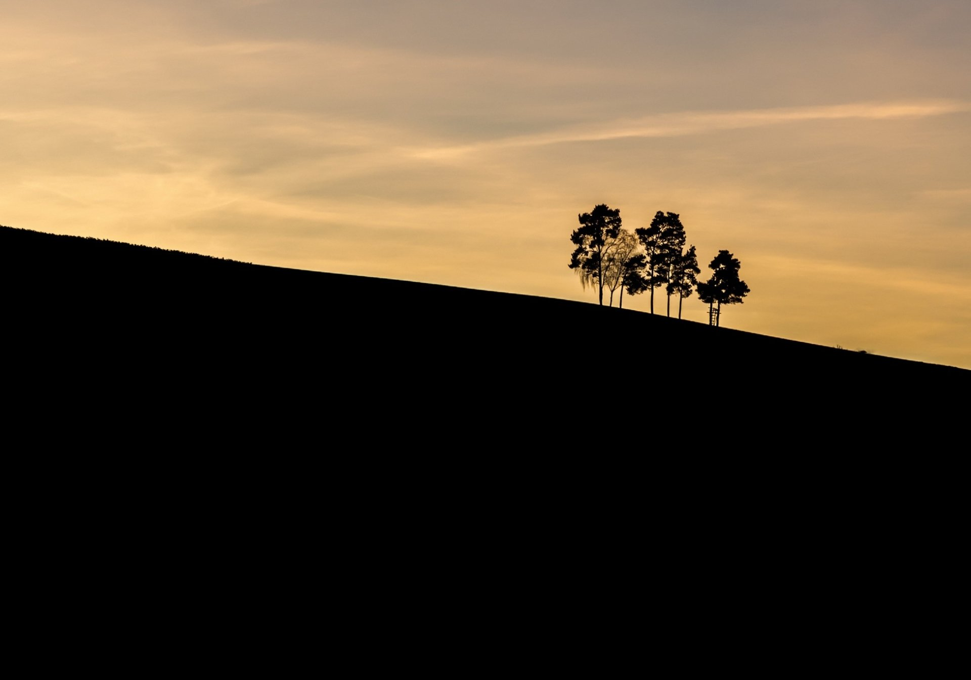 Earth - Sunrise  Tree Silhouette Nature Wallpaper