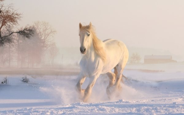 Animal Horse Snow Winter Running HD Wallpaper | Background Image