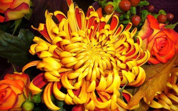 Earth Flower Flowers Chrysanthemum Yellow Flower HD Wallpaper   Background Image