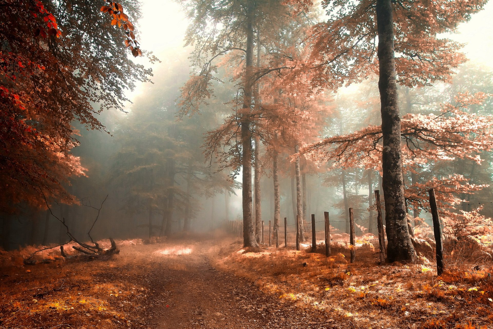 Earth - Forest  Earth Fall Foliage Path Fog Wallpaper