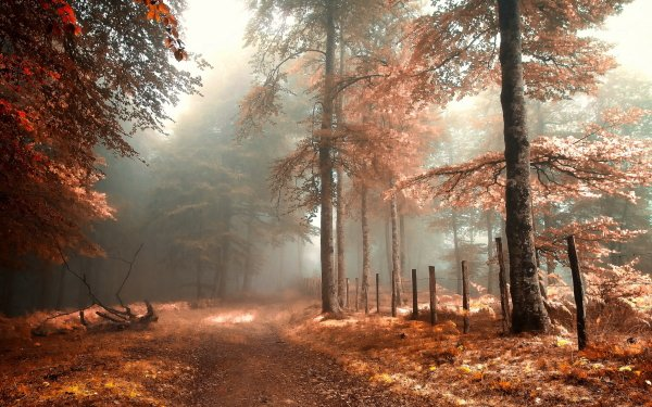 Earth Forest Fall Foliage Path Fog HD Wallpaper | Background Image